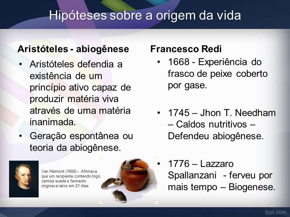 Hipóteses sobre a origem da vida Aristóteles - abiogênese Aristóteles defendia a existência de um princípio ativo capaz de produzir matéria viva atrav