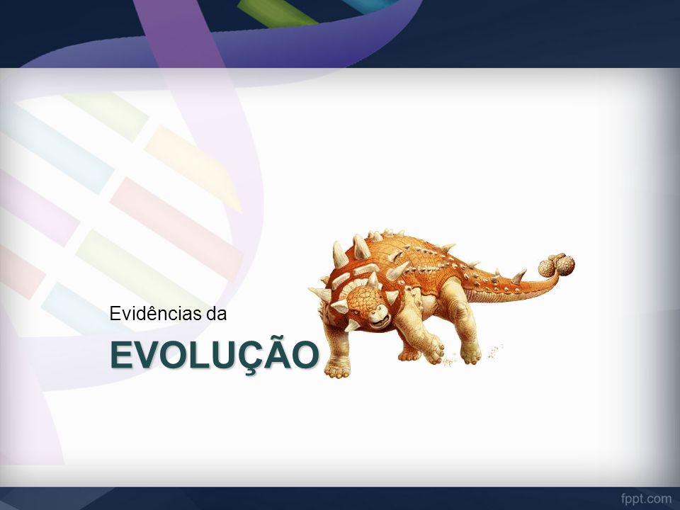 EVOLUÇÃO Evidências da