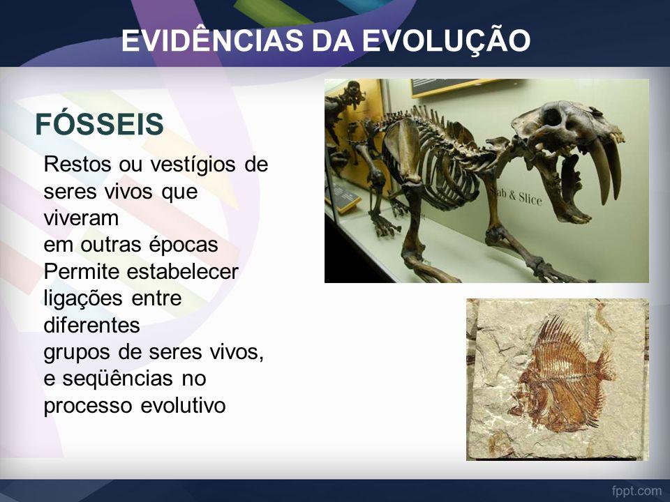 EVIDÊNCIAS DA EVOLUÇÃO FÓSSEIS Restos ou vestígios de seres vivos que viveram em outras épocas Permite estabelecer ligações entre diferentes grupos de