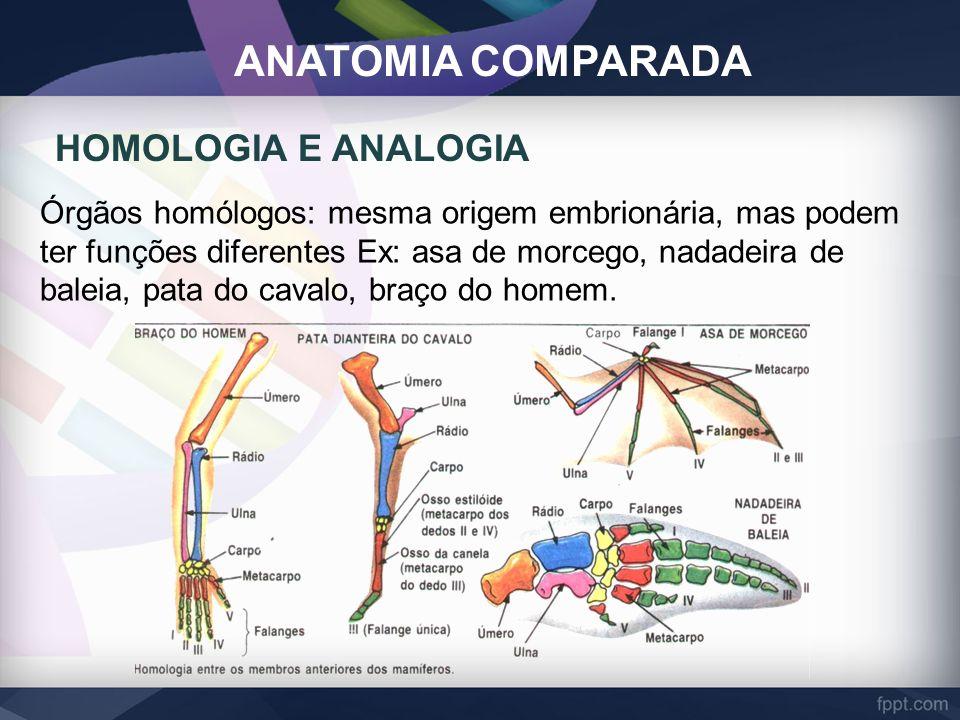 ANATOMIA COMPARADA Órgãos homólogos: mesma origem embrionária, mas podem ter funções diferentes Ex: asa de morcego, nadadeira de baleia, pata do caval