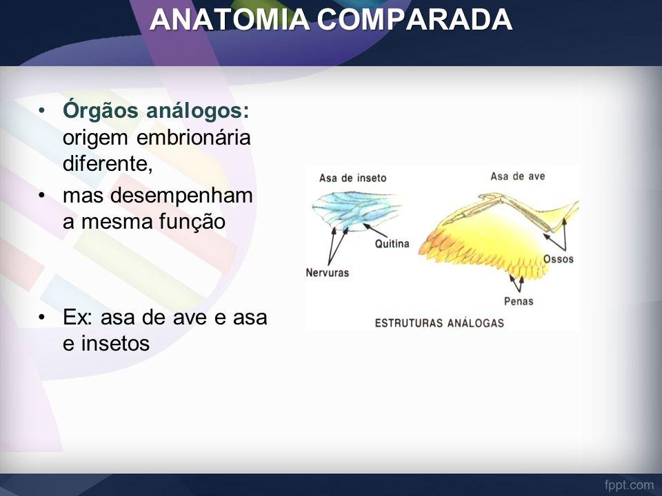ANATOMIA COMPARADA Órgãos análogos: origem embrionária diferente, mas desempenham a mesma função Ex: asa de ave e asa e insetos