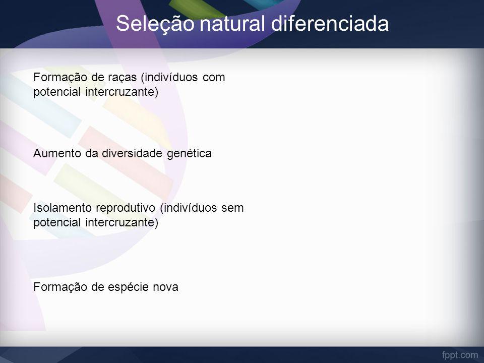 Seleção natural diferenciada Formação de raças (indivíduos com potencial intercruzante) Aumento da diversidade genética Isolamento reprodutivo (indiví