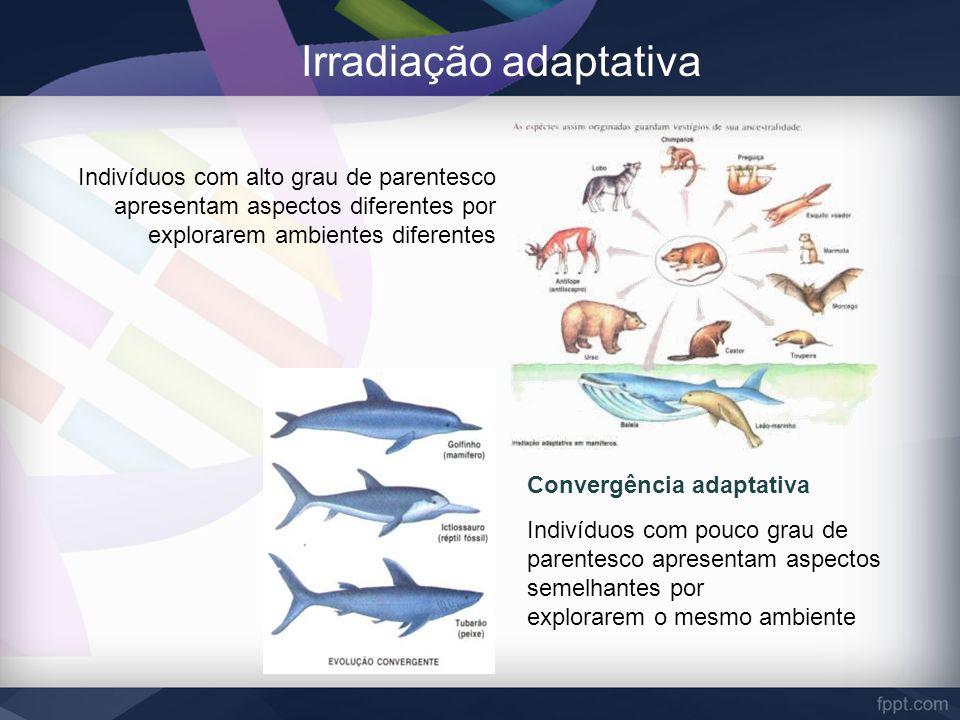 Irradiação adaptativa Indivíduos com alto grau de parentesco apresentam aspectos diferentes por explorarem ambientes diferentes Convergência adaptativ
