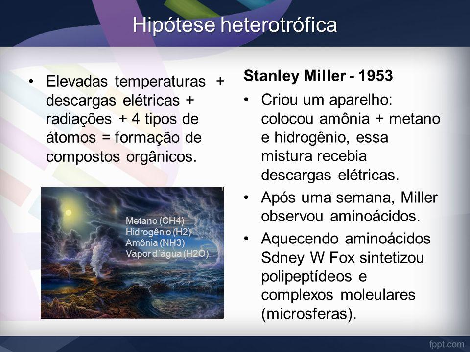 Hipótese heterotrófica Elevadas temperaturas + descargas elétricas + radiações + 4 tipos de átomos = formação de compostos orgânicos. Stanley Miller -