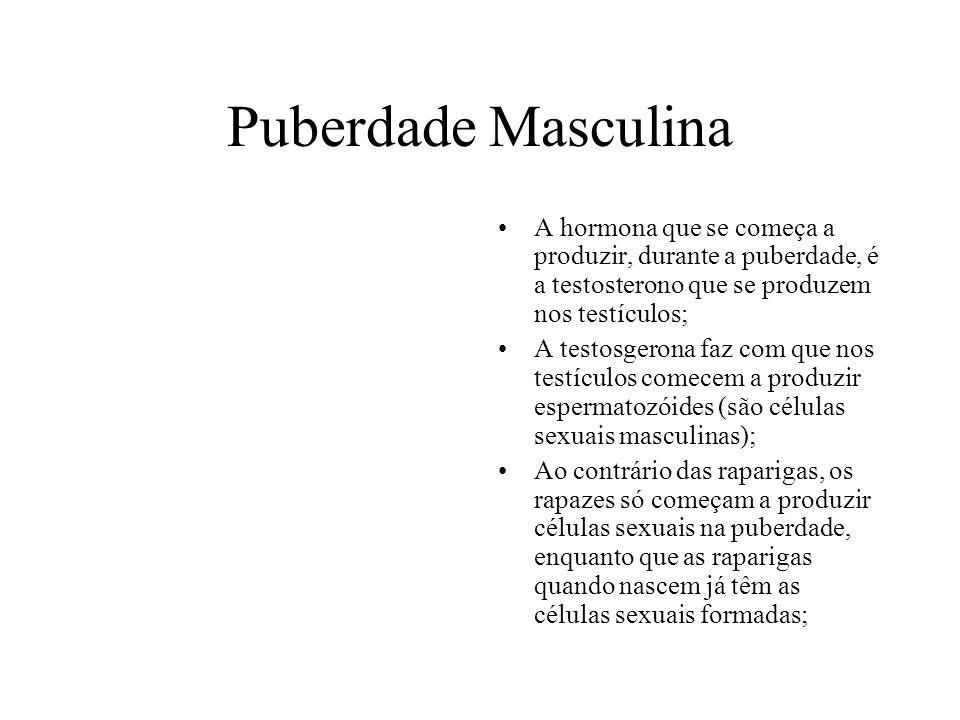 Puberdade Masculina A hormona que se começa a produzir, durante a puberdade, é a testosterono que se produzem nos testículos; A testosgerona faz com q