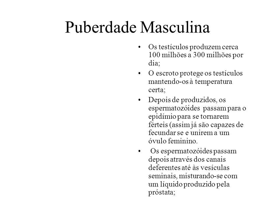 Puberdade Masculina Os testículos produzem cerca 100 milhões a 300 milhões por dia; O escroto protege os testículos mantendo-os à temperatura certa; D