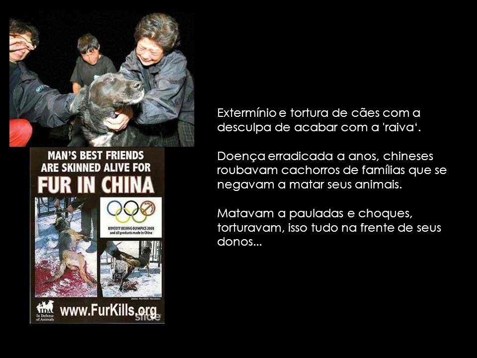 Esse é o 'Crush' - Novo Hobby de alguns chineses. Chineses sedentos por sangue e crueldade, matam gatos e cachorros pisando em cima deles com salto ag