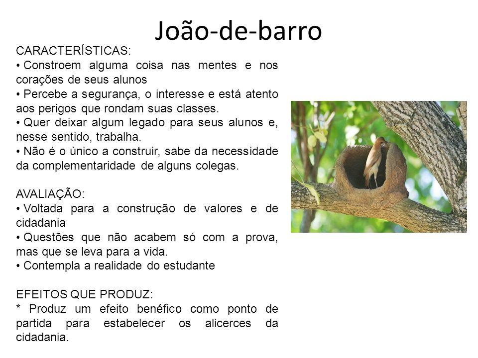 João-de-barro CARACTERÍSTICAS: Constroem alguma coisa nas mentes e nos corações de seus alunos Percebe a segurança, o interesse e está atento aos peri