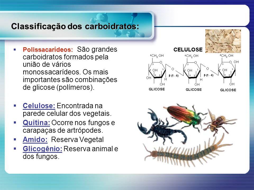 Classificação dos carboidratos: Polissacarídeos: Polissacarídeos: São grandes carboidratos formados pela união de vários monossacarídeos. Os mais impo