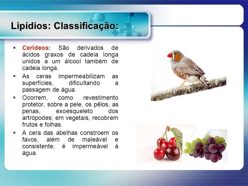 Lipídios: Classificação: Cerídeos: Cerídeos: São derivados de ácidos graxos de cadeia longa unidos a um álcool também de cadeia longa. As ceras imperm