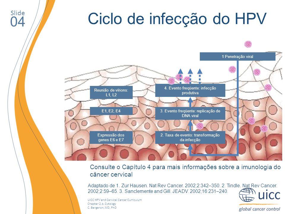 UICC HPV and Cervical Cancer Curriculum Chapter 2.b. Cytology C. Bergeron, MD, PhD Slide 04 Ciclo de infecção do HPV Adaptado de 1. Zur Hausen. Nat Re