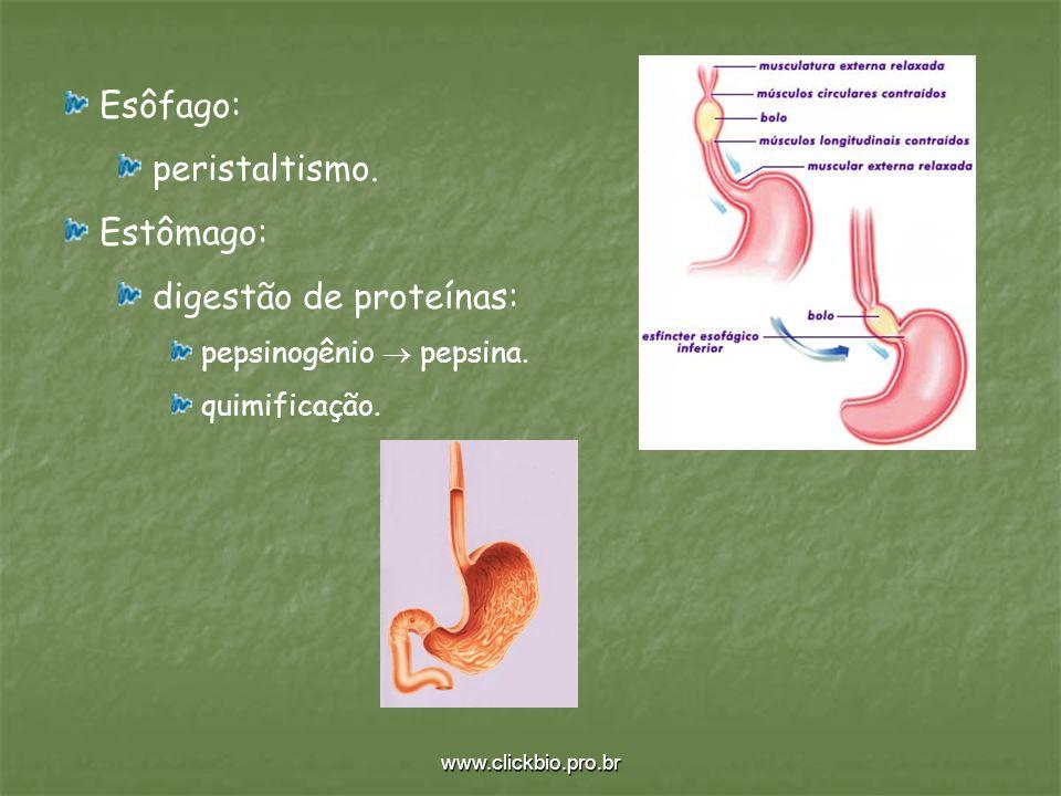 www.clickbio.pro.br Esôfago: peristaltismo. Estômago: digestão de proteínas: pepsinogênio pepsina. quimificação.