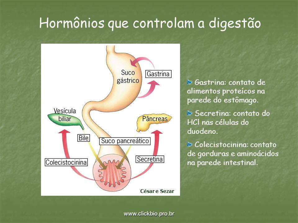 www.clickbio.pro.br Hormônios que controlam a digestão Gastrina: contato de alimentos proteícos na parede do estômago. Secretina: contato do HCl nas c