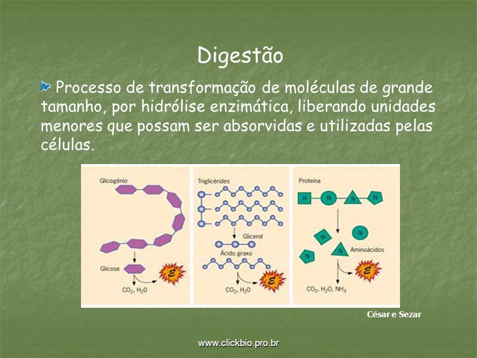 www.clickbio.pro.br Digestão Processo de transformação de moléculas de grande tamanho, por hidrólise enzimática, liberando unidades menores que possam