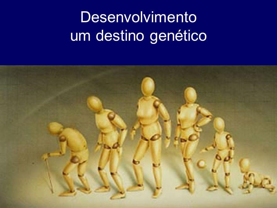 Desenvolvimento um destino genético