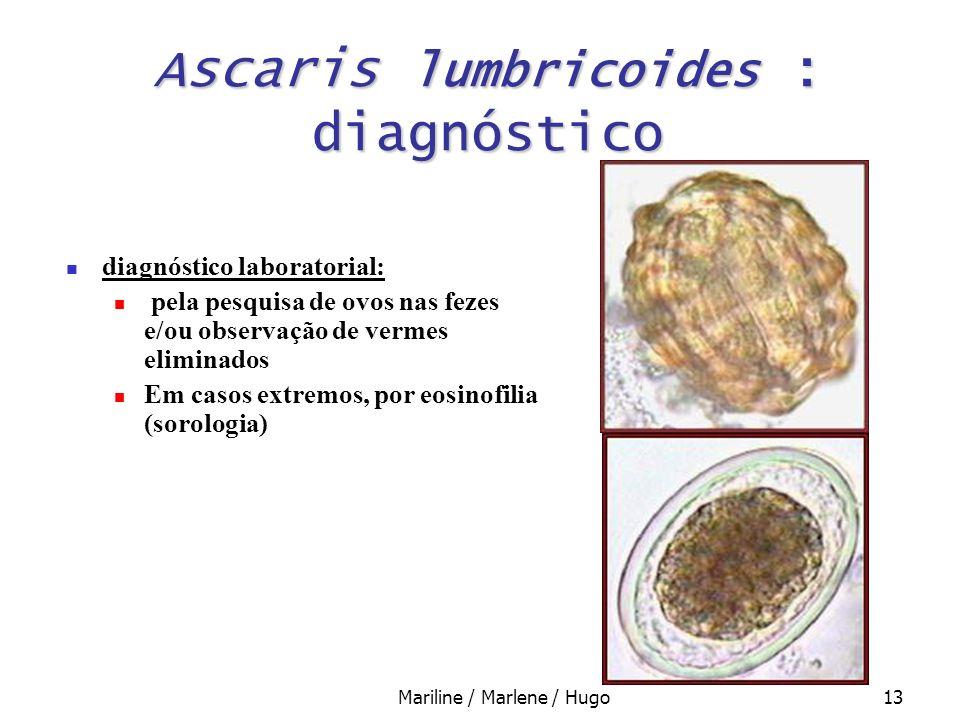 Mariline / Marlene / Hugo13 Ascaris lumbricoides : diagnóstico diagnóstico laboratorial: pela pesquisa de ovos nas fezes e/ou observação de vermes eli