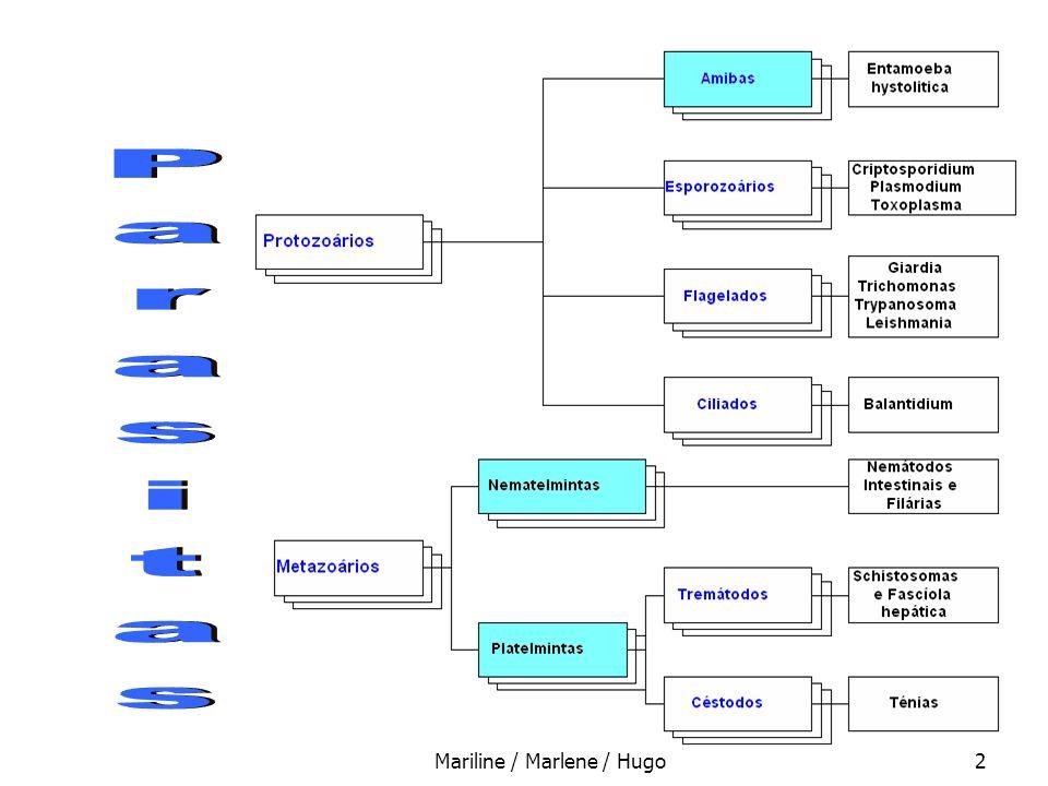 Mariline / Marlene / Hugo13 Ascaris lumbricoides : diagnóstico diagnóstico laboratorial: pela pesquisa de ovos nas fezes e/ou observação de vermes eliminados Em casos extremos, por eosinofilia (sorologia)