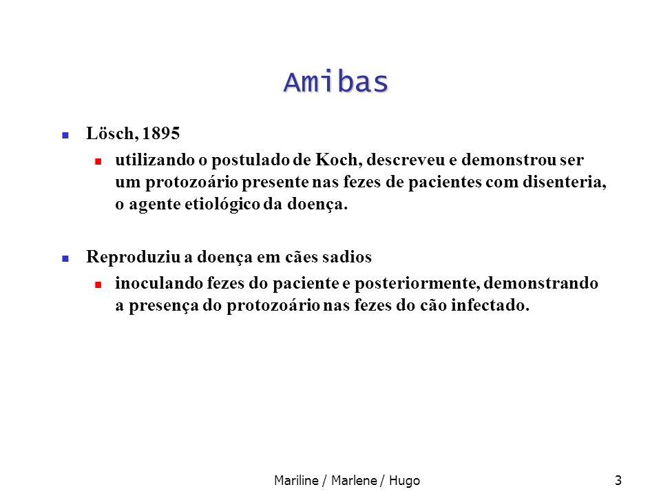 3 Amibas Lösch, 1895 utilizando o postulado de Koch, descreveu e demonstrou ser um protozoário presente nas fezes de pacientes com disenteria, o agent