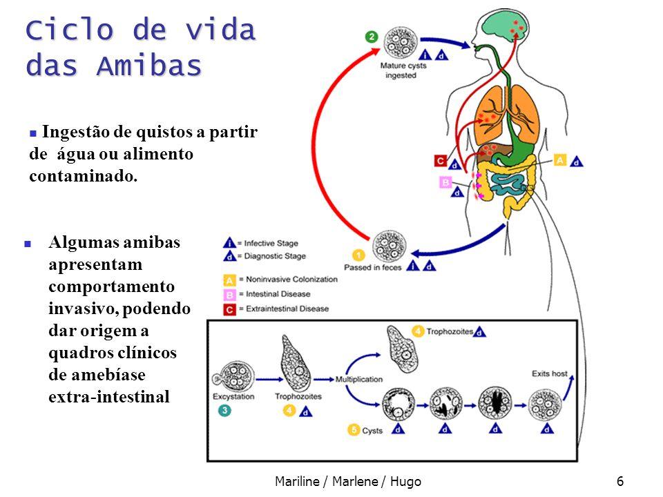 Mariline / Marlene / Hugo7 Patologia e Diagnóstico das Amibas Quadro assintomático; Dores abdominais (cólicas); Diarreia; Invasão tecidular Intestinal e Extra-intestinal.