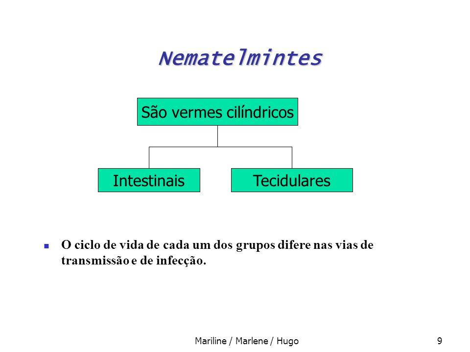 Mariline / Marlene / Hugo9 Nematelmintes O ciclo de vida de cada um dos grupos difere nas vias de transmissão e de infecção. São vermes cilíndricos In