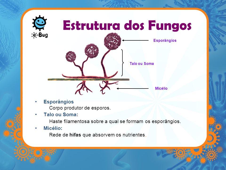 Estrutura dos Fungos Esporângios Corpo produtor de esporos. Talo ou Soma: Haste filamentosa sobre a qual se formam os esporângios. Micélio: Rede de hi