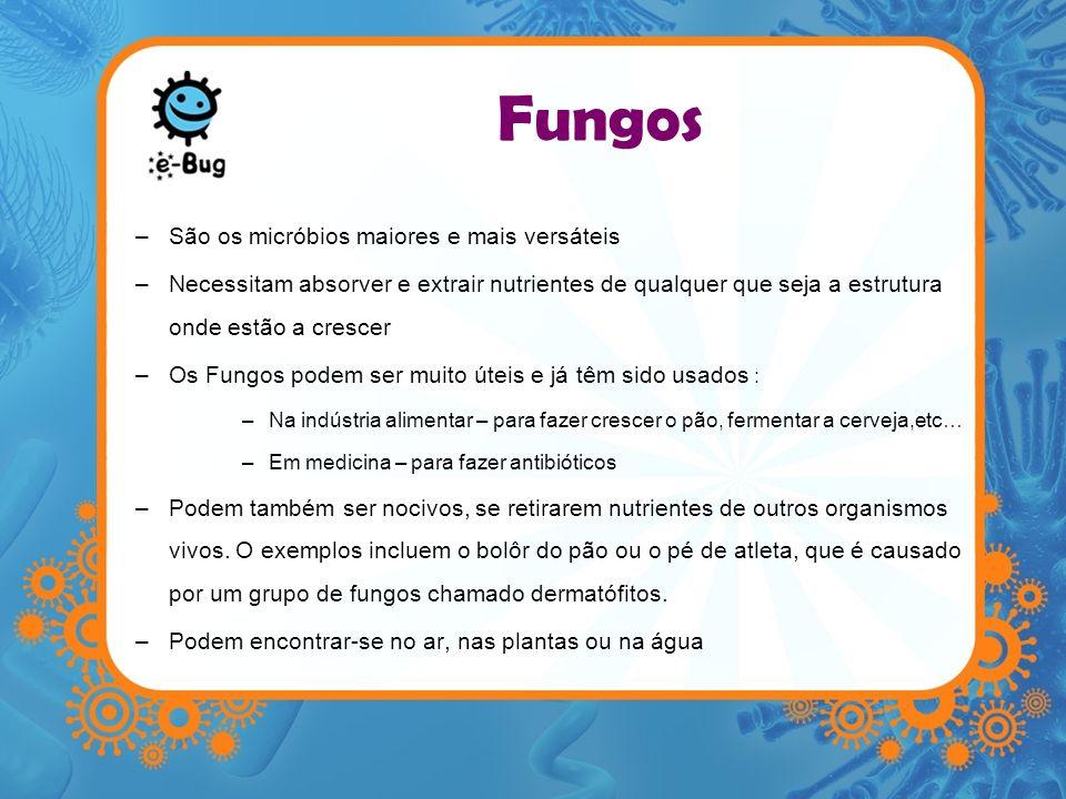 Fungos –São os micróbios maiores e mais versáteis –Necessitam absorver e extrair nutrientes de qualquer que seja a estrutura onde estão a crescer –Os