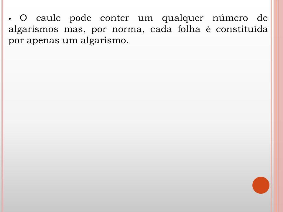 O caule pode conter um qualquer número de algarismos mas, por norma, cada folha é constituída por apenas um algarismo.