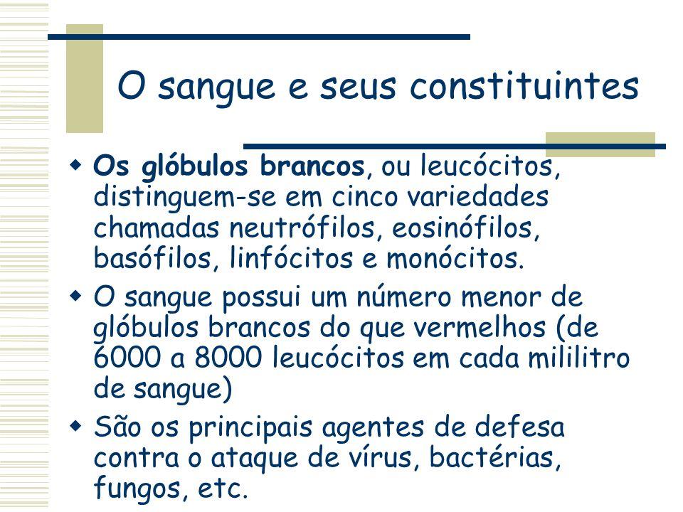 O sangue e seus constituintes Os glóbulos brancos, ou leucócitos, distinguem-se em cinco variedades chamadas neutrófilos, eosinófilos, basófilos, linf