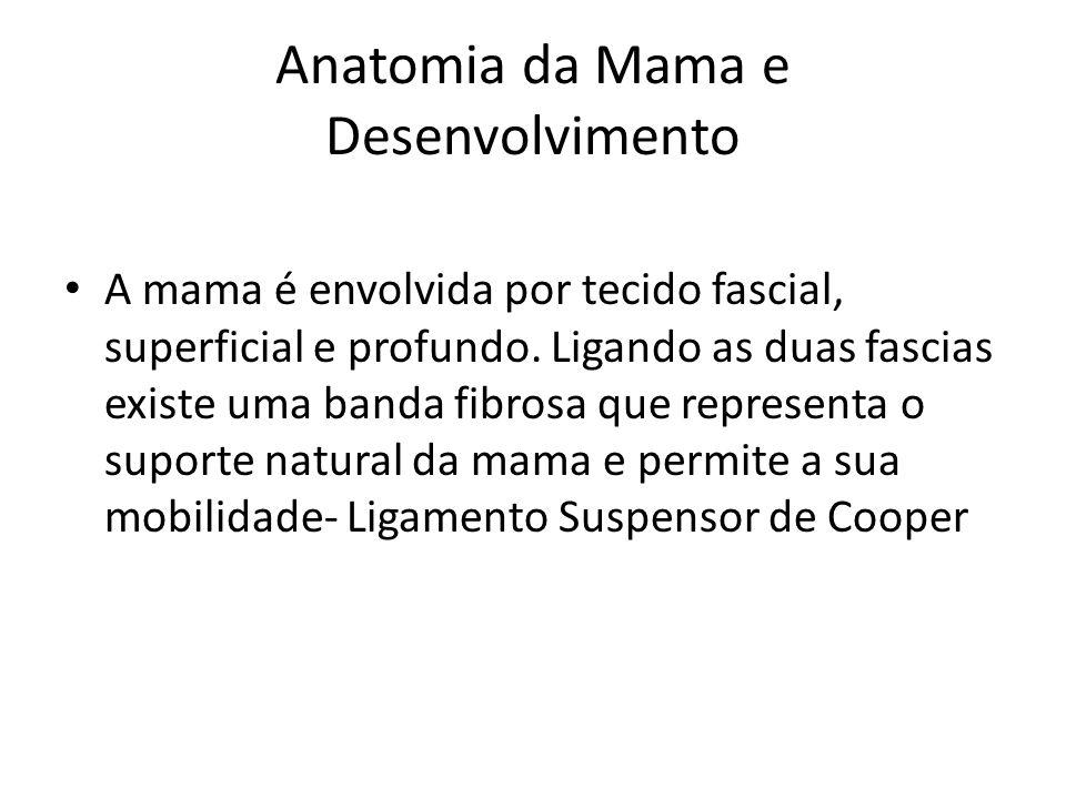 Anatomia da Mama e Desenvolvimento A mama é envolvida por tecido fascial, superficial e profundo. Ligando as duas fascias existe uma banda fibrosa que