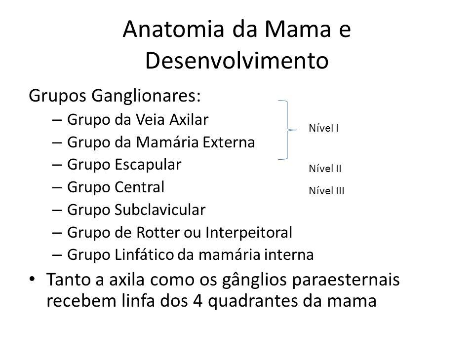 Anatomia da Mama e Desenvolvimento Grupos Ganglionares: – Grupo da Veia Axilar – Grupo da Mamária Externa – Grupo Escapular – Grupo Central – Grupo Su