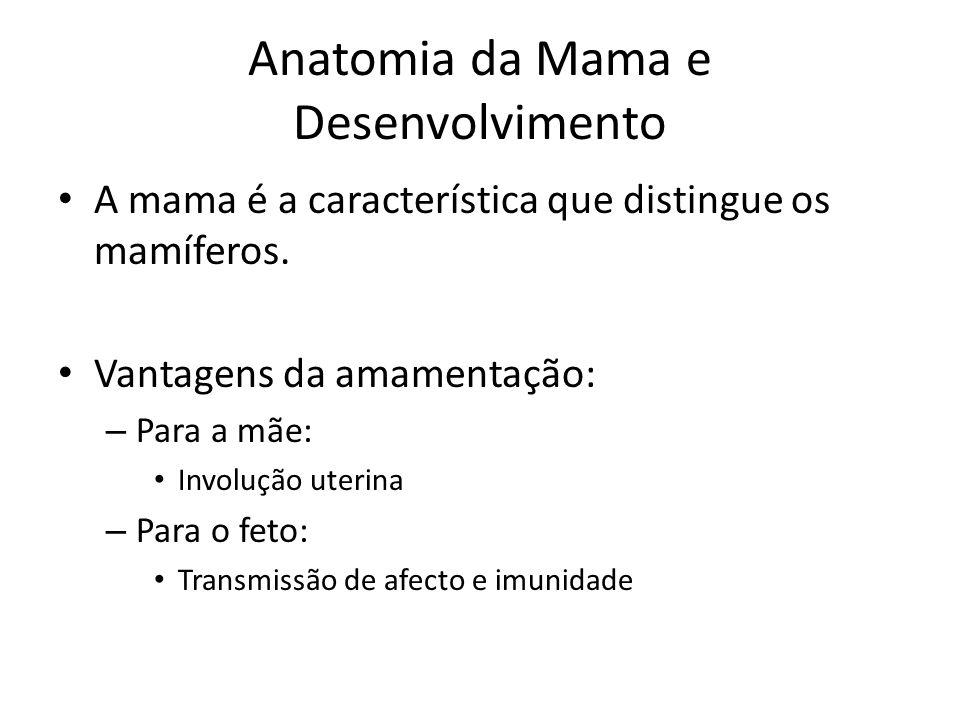Anatomia da Mama e Desenvolvimento A mama é a característica que distingue os mamíferos. Vantagens da amamentação: – Para a mãe: Involução uterina – P