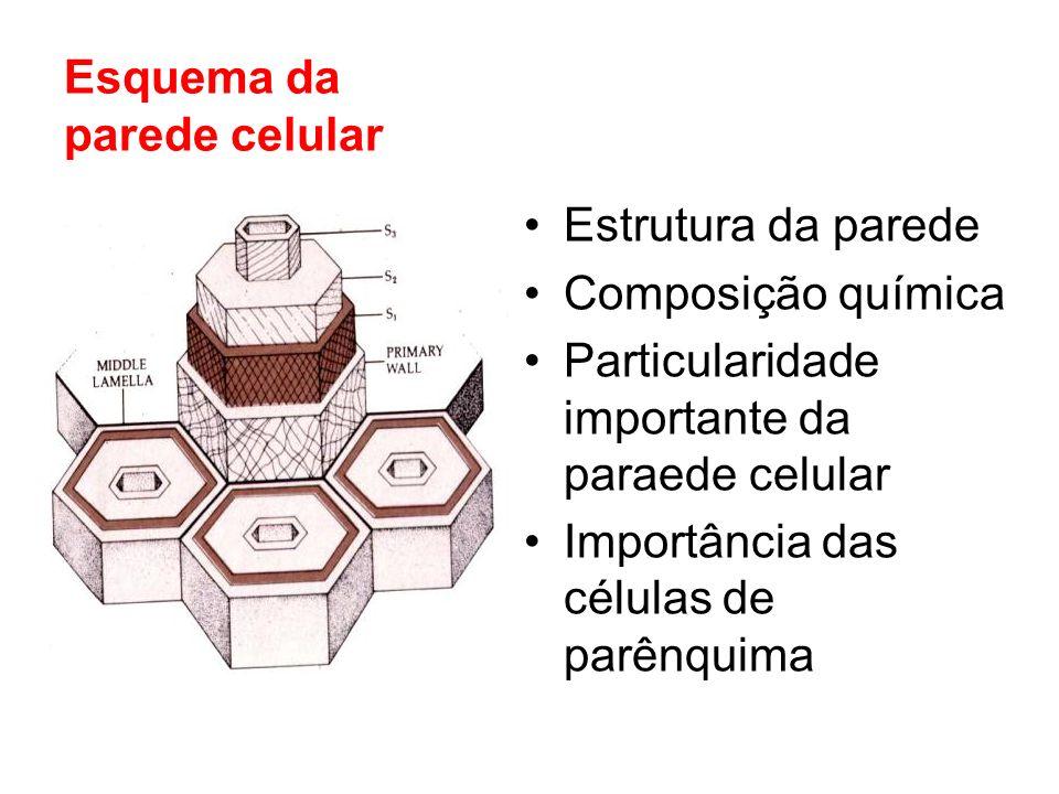 Preventivo Construção de um imóvel: - Solo seco Solo sem madeiras enterradas Injectar um produto termicida- prod.