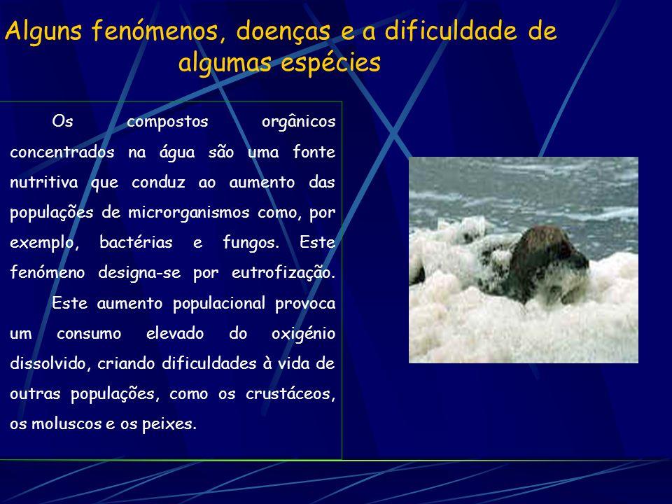 ACABAR ACABAR com a agressão ao nosso ambiente!!.