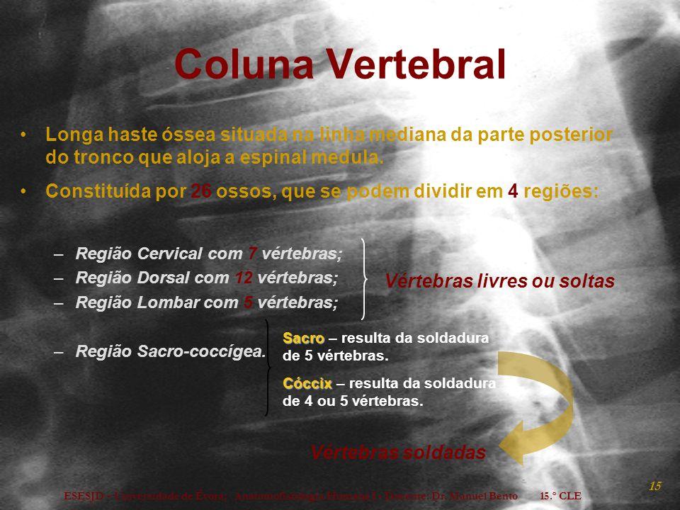 ESESJD - Universidade de Évora; Anatomofisiologia Humana I - Docente: Dr. Manuel Bento 15.º CLE 15 Coluna Vertebral Longa haste óssea situada na linha