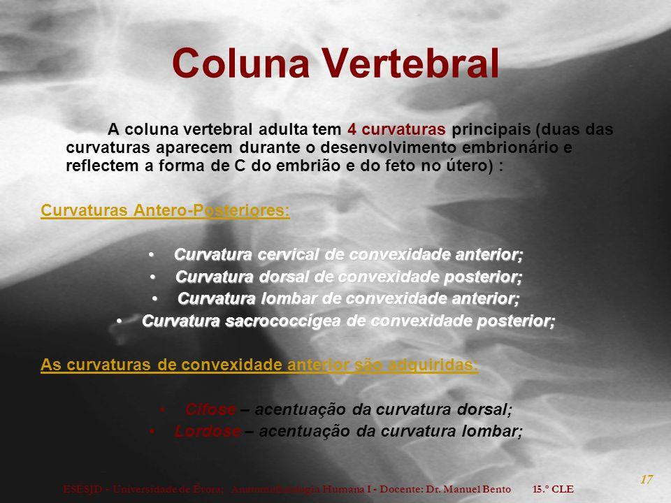 ESESJD - Universidade de Évora; Anatomofisiologia Humana I - Docente: Dr. Manuel Bento 15.º CLE 17 Coluna Vertebral 4 curvaturas A coluna vertebral ad