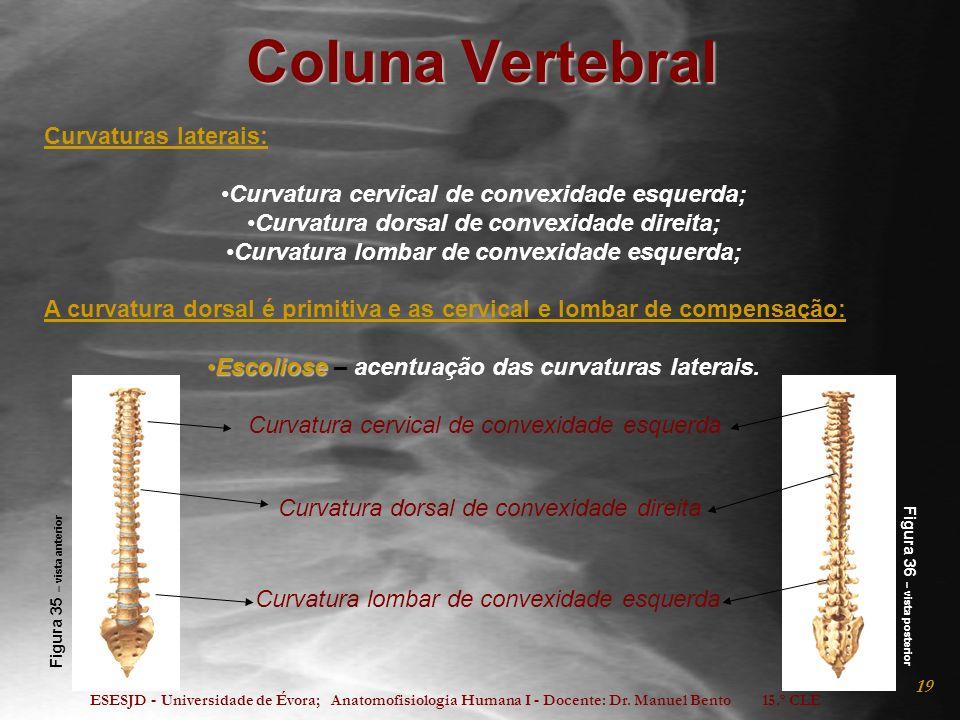 ESESJD - Universidade de Évora; Anatomofisiologia Humana I - Docente: Dr. Manuel Bento 15.º CLE 19 Coluna Vertebral Curvaturas laterais: Curvatura cer