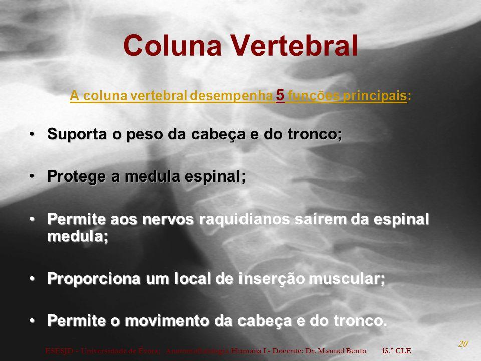 ESESJD - Universidade de Évora; Anatomofisiologia Humana I - Docente: Dr. Manuel Bento 15.º CLE 20 Coluna Vertebral A coluna vertebral desempenha 5 fu