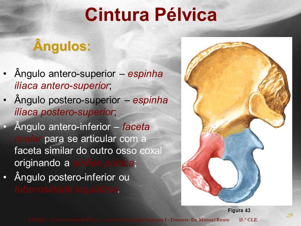 ESESJD - Universidade de Évora; Anatomofisiologia Humana I - Docente: Dr. Manuel Bento 15.º CLE 29 Cintura PélvicaÂngulos: Ângulo antero-superior – es