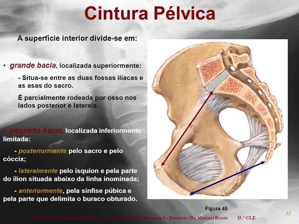 ESESJD - Universidade de Évora; Anatomofisiologia Humana I - Docente: Dr. Manuel Bento 15.º CLE 31 Cintura Pélvica A superfície interior divide-se em: