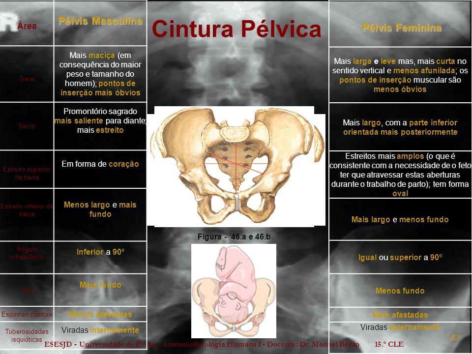 ESESJD - Universidade de Évora; Anatomofisiologia Humana I - Docente: Dr. Manuel Bento 15.º CLE 32 Cintura Pélvica Pélvis Feminina Pélvis Feminina Mai