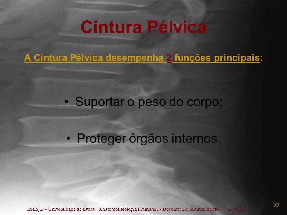 ESESJD - Universidade de Évora; Anatomofisiologia Humana I - Docente: Dr. Manuel Bento 15.º CLE 33 Cintura Pélvica A Cintura Pélvica desempenha 2 funç