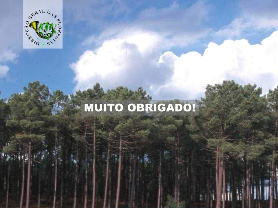 direcção-geral das florestas 19 MUITO OBRIGADO!