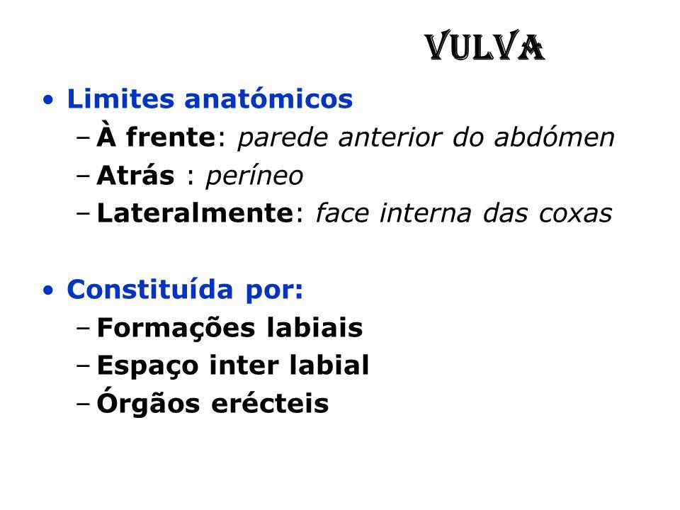 Vulva Limites anatómicos –À frente: parede anterior do abdómen –Atrás : períneo –Lateralmente: face interna das coxas Constituída por: –Formações labi