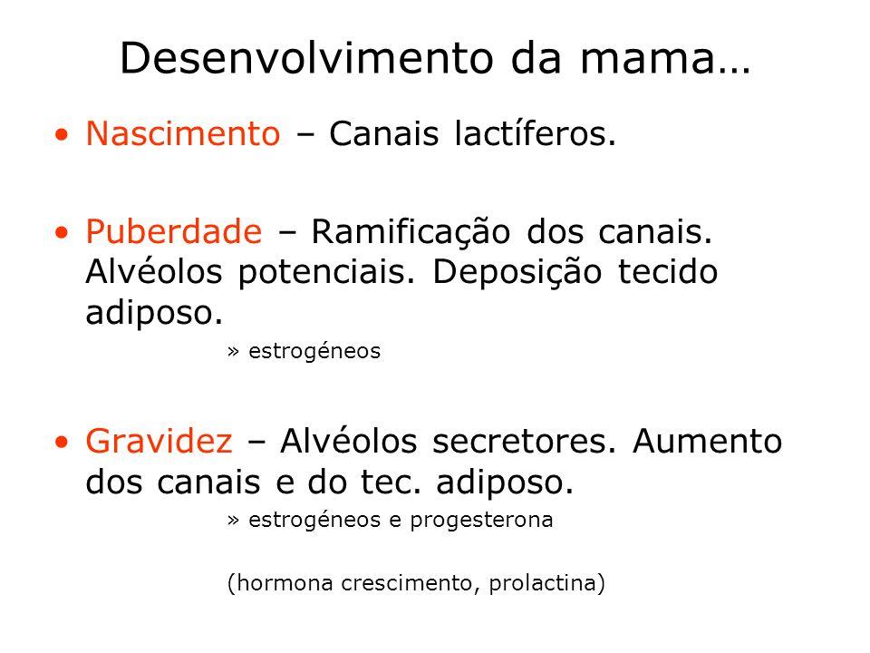 Desenvolvimento da mama… Nascimento – Canais lactíferos. Puberdade – Ramificação dos canais. Alvéolos potenciais. Deposição tecido adiposo. »estrogéne