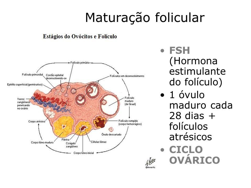 Maturação folicular FSH (Hormona estimulante do folículo) 1 óvulo maduro cada 28 dias + folículos atrésicos CICLO OVÁRICO