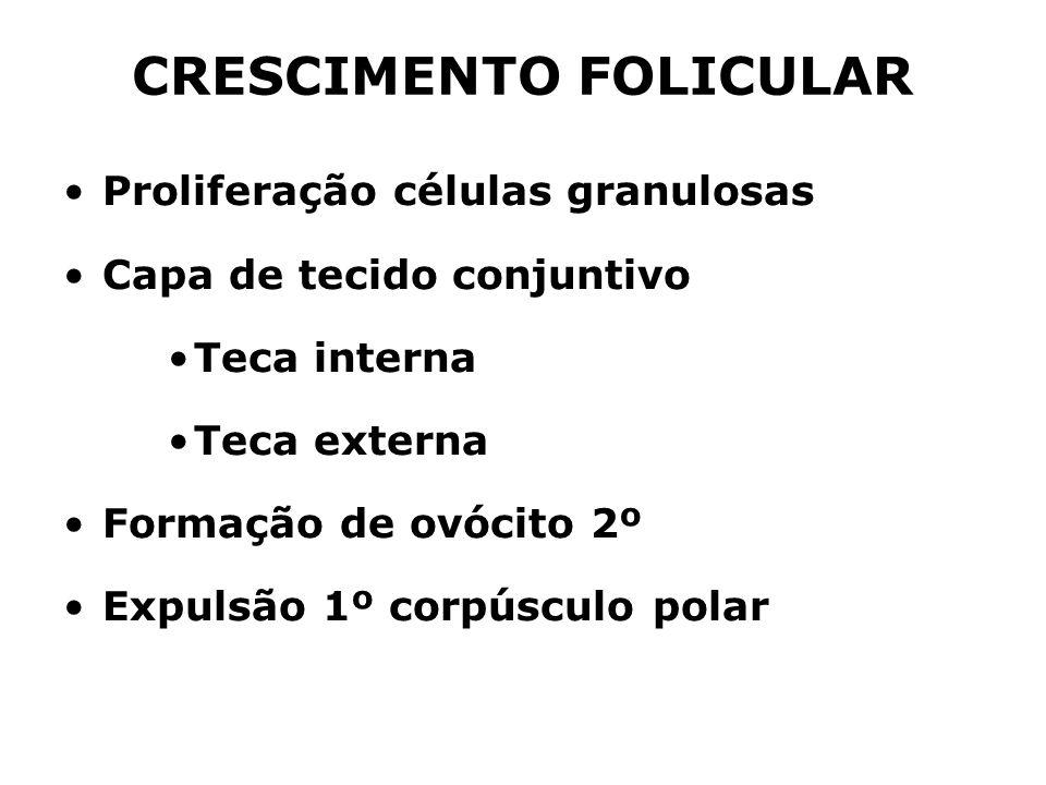 CRESCIMENTO FOLICULAR Proliferação células granulosas Capa de tecido conjuntivo Teca interna Teca externa Formação de ovócito 2º Expulsão 1º corpúscul