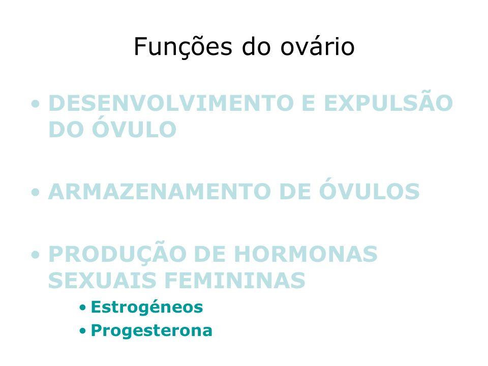 Funções do ovário DESENVOLVIMENTO E EXPULSÃO DO ÓVULO ARMAZENAMENTO DE ÓVULOS PRODUÇÃO DE HORMONAS SEXUAIS FEMININAS Estrogéneos Progesterona