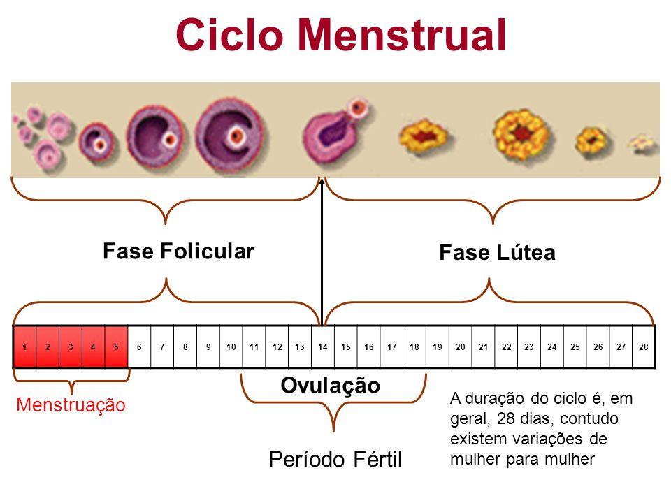 12345678910111213141516171819202122232425262728 (28 dias) Fase Folicular Fase Lútea Ovulação Menstruação Ciclo Menstrual A duração do ciclo é, em gera