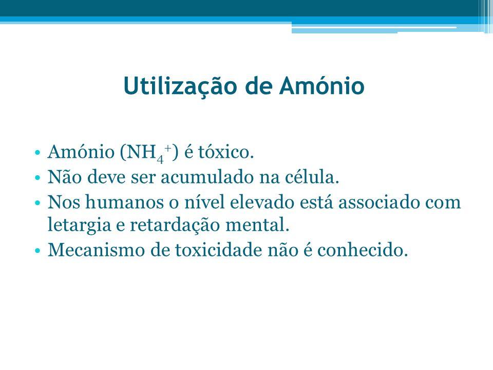 Utilização de Amónio Amónio (NH 4 + ) é tóxico. Não deve ser acumulado na célula. Nos humanos o nível elevado está associado com letargia e retardação