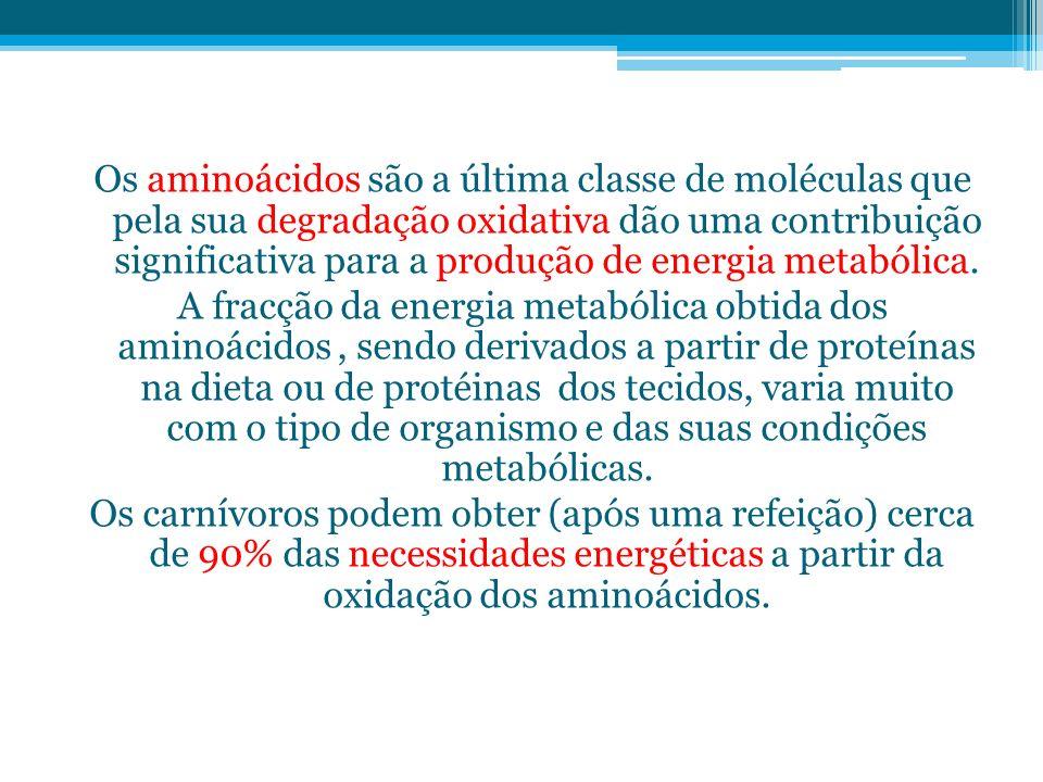 Os aminoácidos são a última classe de moléculas que pela sua degradação oxidativa dão uma contribuição significativa para a produção de energia metabó
